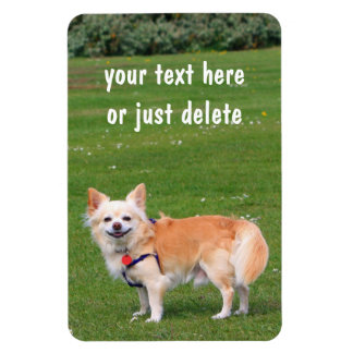 Chihuahua dog long-haired beautiful photo custom magnet