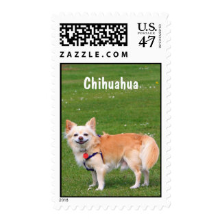 Chihuahua dog long-haired beautiful photo custom postage