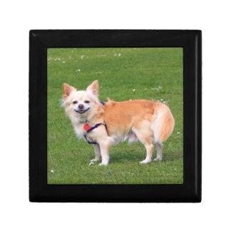 Chihuahua dog long-haired beautiful photo jewelry box