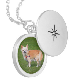 Chihuahua dog long-haired beautiful photo portrait silver plated necklace