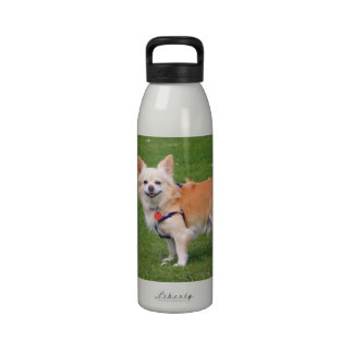 Chihuahua dog long-haired beautiful photo water bottle