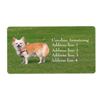 Chihuahua dog long-haired custom address labels