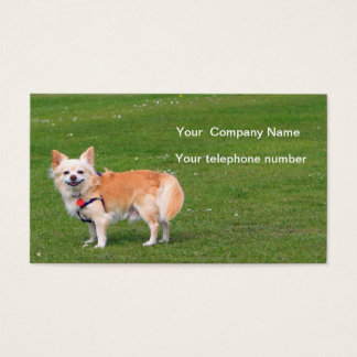 Chihuahua dog long-haired photo business card