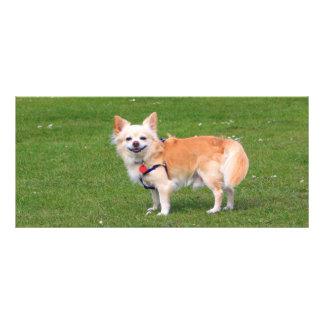Chihuahua dog long-haired photo custom bookmark rack card template
