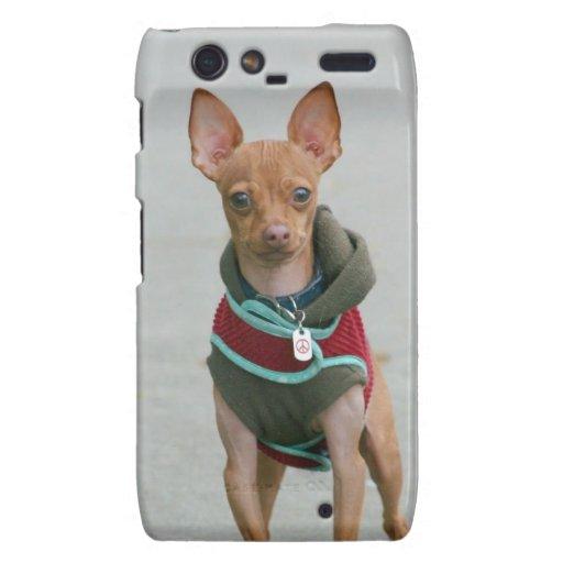 Chihuahua dog motorola droid RAZR case