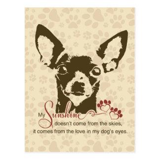 Chihuahua Dog My Sunshine Postcard