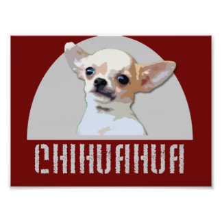 Chihuahua Dog Photograph