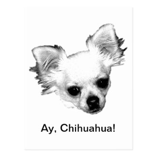 Chihuahua Dog Picture. Ay, Chihuahua! Postcard
