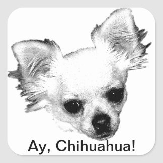 Chihuahua Dog Picture. Ay, Chihuahua! Stickers