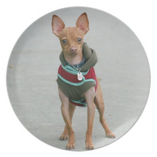 Chihuahua dog party plate