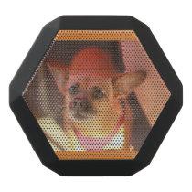 Chihuahua dog speaker portrait of dog