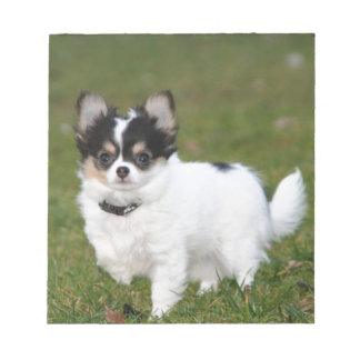 Chihuahua dog standing on a green lawn note pad