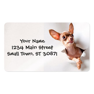 Chihuahua  dog  Tearing Through Pack Of Standard Business Cards