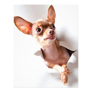 Chihuahua  dog  Tearing Through Flyer