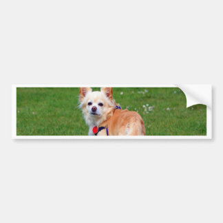 chihuahua dog waiting for mom and love bumper sticker