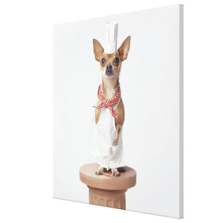 Chihuahua dog wearing chef's whites, studio shot canvas print