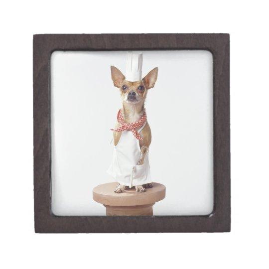 Chihuahua dog wearing chef's whites, studio shot gift box