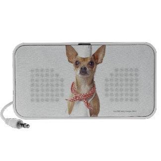 Chihuahua dog wearing chef's whites, studio shot mini speaker