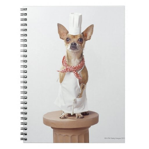 Chihuahua dog wearing chef's whites, studio shot spiral notebook