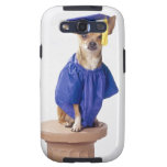 Chihuahua dog wearing graduation uniform, studio galaxy SIII covers
