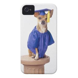 Chihuahua dog wearing graduation uniform, studio Case-Mate iPhone 4 case