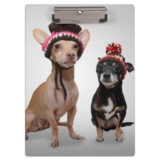 Chihuahua Dogs With Hats Photo Clipboard