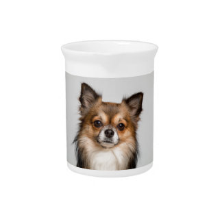 chihuahua drink pitcher