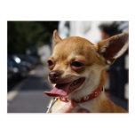 Chihuahua dulce de Charlie Postales
