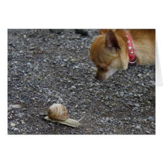 Chihuahua dulce de Charlie Tarjeta De Felicitación