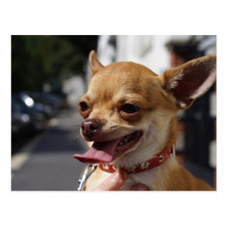 Chihuahua dulce de Charlie Tarjetas Postales