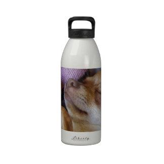 Chihuahua el dormir botellas de beber