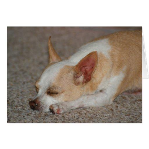 Chihuahua el dormir tarjeta de felicitación