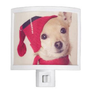 Chihuahua en casquillo del invierno luces de noche