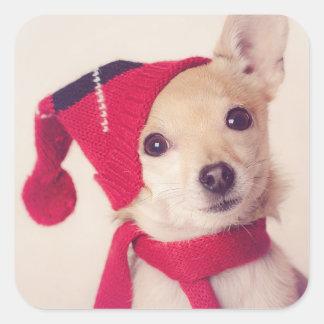 Chihuahua en casquillo del invierno pegatina cuadrada