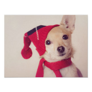 Chihuahua en casquillo del invierno póster