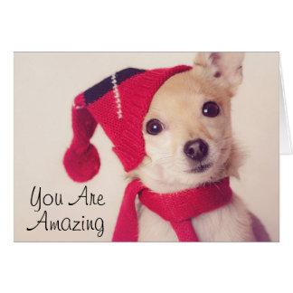 Chihuahua en casquillo del invierno tarjeta de felicitación