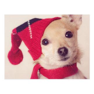 Chihuahua en casquillo del invierno tarjetas postales