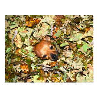 Chihuahua en hojas de otoño tarjeta postal