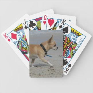 Chihuahua en la playa barajas de cartas