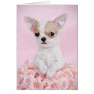 Chihuahua en rosa con los rosas