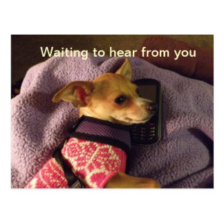 Chihuahua en tarjeta del teléfono tarjeta postal