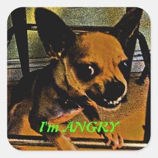 Chihuahua enojada pegatina cuadrada