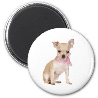 Chihuahua es una cosa de la chihuahua imán redondo 5 cm