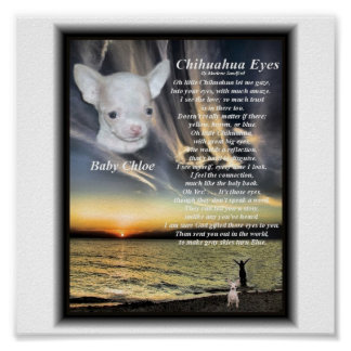 Chihuahua eyes for Baby Chloe Poster