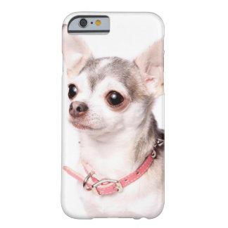 Chihuahua femenina con el cuello rosado