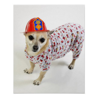 Chihuahua Fireman Design Print