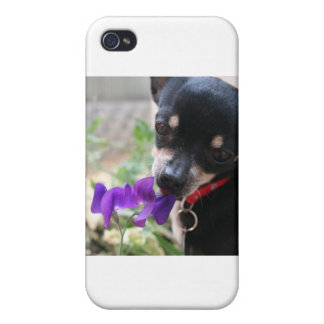 Chihuahua & Flower Covers For iPhone 4