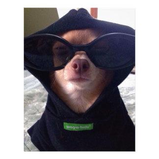 Chihuahua fresca plantilla de membrete