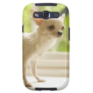 Chihuahua Galaxy SIII Coberturas
