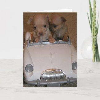 Chihuahua Greeting Card card